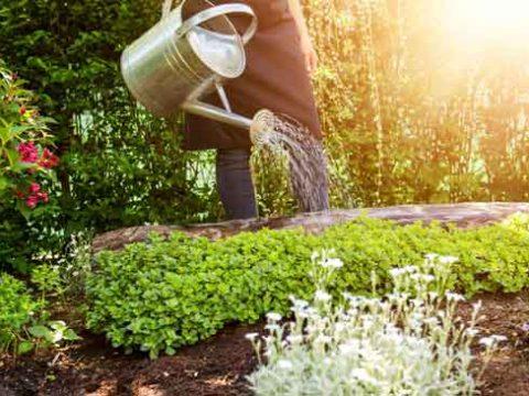 Садовник, как найти хорошего в Крыму?